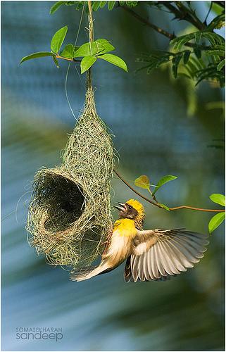 photo credit: Sandeep Somasekharan via photopin cc