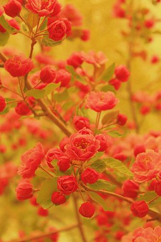 photo credit: Pink Sherbet Photography via photopin cc