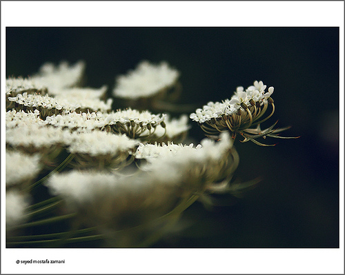 photo credit: seyed mostafa zamani via photopin cc