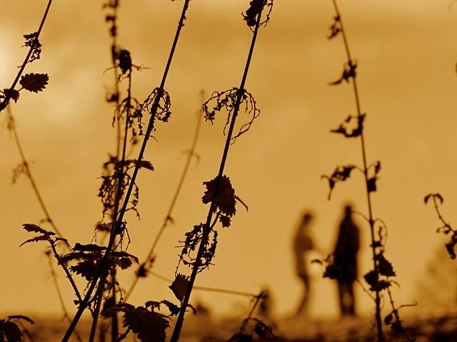 plant seed photo